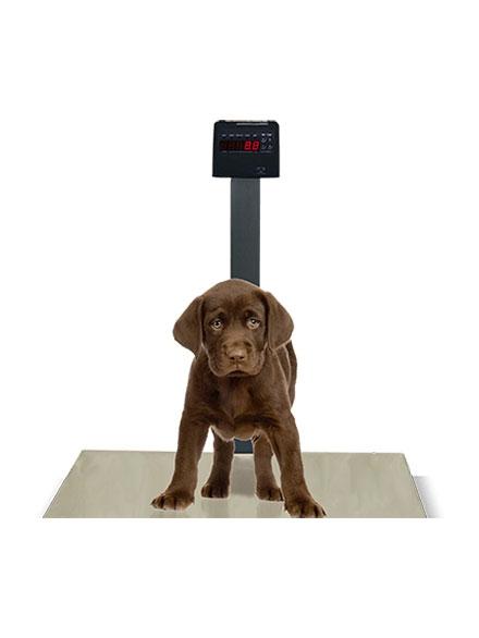 Balança PET em Aço Carbono- DP